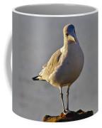 Sun-lit Gull Coffee Mug