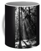 Sun Through The Trees Coffee Mug