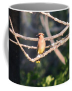 Sunbathing Cedar Waxwing  Coffee Mug
