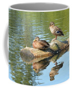 Sunbathing Mallards Reflecting Coffee Mug