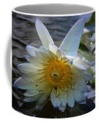 Sundown At Lotus Pond Coffee Mug