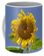 Sunflower At Latrun Coffee Mug