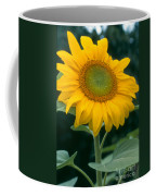 Sunflower In Seattle Coffee Mug