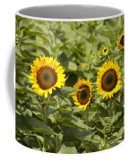 Sunflower Patch Coffee Mug by Bill Cannon