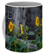 Sunflower Quartet Coffee Mug