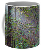 Sunlight Highlights In Armstrong Redwoods State Preserve Near Guerneville-ca Coffee Mug