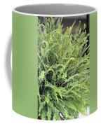 Sunlit Ferns Coffee Mug
