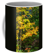 Sunlit Coffee Mug