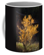 Sunlit Tree In Palo Duro Canyon 110213.06 Coffee Mug