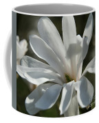 Sunlit White Magnolia Coffee Mug
