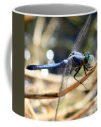 Sunning Blue Dragonfly Square Coffee Mug