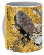 Sunning Stinkbug Coffee Mug