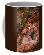 Sunny Spot Nap Coffee Mug
