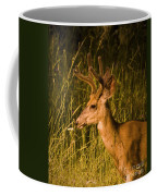 Sunset Buck Coffee Mug