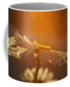 Sunset Daisy Coffee Mug