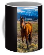 Sunset Bay Horse Heber Valley Utah Coffee Mug