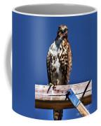 Swainson Hawk Coffee Mug