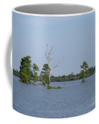 Swamp Cypress Trees Coffee Mug