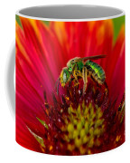 Sweat Bee Collecting Pollen Coffee Mug