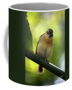 Sweet Bird On Branch Coffee Mug