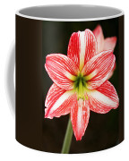 Sweet Lillian Amaryllis Coffee Mug