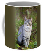 Sweet Little Tabby Kitten Coffee Mug