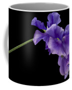 Sweet Pea Study Coffee Mug by Anne Gilbert