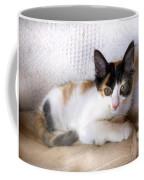 Sweet The Kitten Coffee Mug