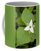 Sweet White Trillium Coffee Mug