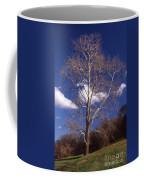 Sycamore On The Hill Coffee Mug