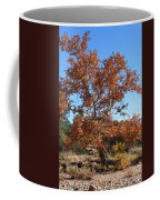 Sycamore Tree In Fall Colors Coffee Mug