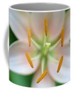 Symmetrical Flower Closeup Coffee Mug