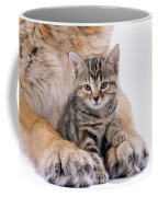 Tabby Kitten Between Large Dogs Paws Coffee Mug