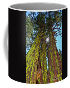Tahoe Trees - Lake Tahoe By Diana Sainz Coffee Mug