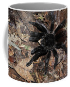 Tarantula Amazon Brazil Coffee Mug