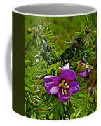 Tarbush In Chihuahuan Desert Of Big Bend National Park-texas   Coffee Mug