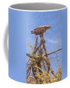 Tawny Eagle  Aquila Rapax Calling From  Acacia Bush Coffee Mug