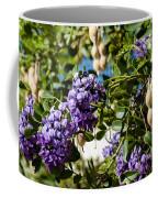 Texas Mountain Laurel Sophora Flowers And Mescal Beans Coffee Mug