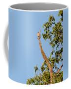The American Kestrel Coffee Mug