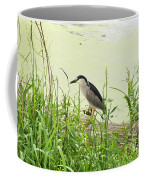 The Black-crowned Night Heron Coffee Mug