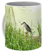 The Black-crowned Night Heron Coffee Mug