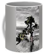 The Catus Tree Siesta Key Florida Coffee Mug