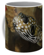 The Colorful Fish Coffee Mug