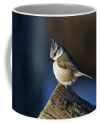The Crested Tit In The Sun Coffee Mug