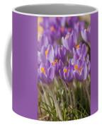 The Crocus Flowers  Coffee Mug
