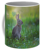 The Eastern Cottontail Coffee Mug