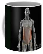 The External Oblique Muscles Coffee Mug