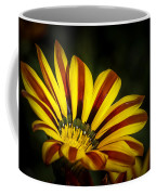 The Gazania Coffee Mug