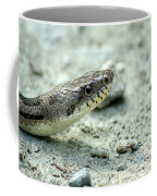 The Gray Eastern Rat Snake Right Side Head Shot Coffee Mug