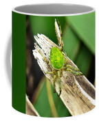 The Green Spider Coffee Mug